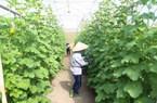 Gần 2.800 DN nông nghiệp thành lập mới, thêm nhiều chuỗi liên kết nông sản