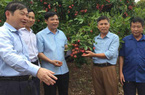 Tái cơ cấu nông nghiệp: Khai mở nhiều thị trường, ngành nông nghiệp lập kỷ lục