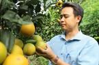 Ảnh, clip: Ông chủ máy công nghiệp lên rừng trồng cam hữu cơ