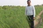 Bắc Ninh: Giúp nông dân thoát nghèo bền vững
