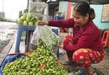 Trái dại, rau mọc hoang hút hàng mùa nước nổi ở tỉnh An Giang, dân đi hái kiếm tiền trong tháng lũ