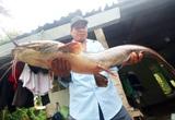 Hậu Giang: Bắt được con cá trê to lạ, mồm toàn râu, dài 1 m, nặng 8 kg, dân kéo đến xem