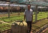 Quảng Nam: Một ông nông dân mang rau dại về vườn trồng chăm như chăm con mọn và bất ngờ lãi lớn