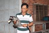 Nuôi loài thú trông như mèo mướp, bế trên tay mà mồm vẫn cố ngậm trái chuối, một nông dân tỉnh Tây Ninh khá giả