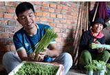 """Quảng Ngãi: Cất bằng kinh doanh quốc tế, trai 9X về làng trồng """"rau vua"""", kiếm nửa tỷ mỗi năm"""