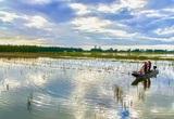 Hậu Giang: Nước rút ra sông, nông dân dùng thứ lưới gì mà kéo bắt hàng tạ ốc bươu vàng, bắt được cả cá lớn?