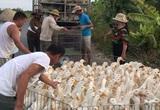 Giá gia cầm hôm nay 26/11: Nguồn cung gà, vịt tăng cao, nhiều tỉnh khuyến cáo khẩn điều này