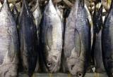 Xuất khẩu cá ngừ sang EU tăng trưởng tốt nhờ Hiệp định EVFTA