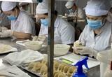 Tổ yến cho nguồn thu xuất khẩu khoảng 200 - 300 triệu USD/năm