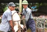 Giá lợn hơi hôm nay (29/11): Ổn định sau một tuần tăng - giảm trái chiều