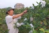 """Thái Bình: Một ông nông dân có đôi """"bàn tay vàng"""" trong làng mỹ nghệ, lại trồng vườn cây ra trái quá trời"""