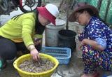 Phú Yên: Thứ tôm đặc sản bất ngờ bơi dày đặc ở đầm Ô Loan, nông dân rủ nhau đi bắt, có người trúng đậm