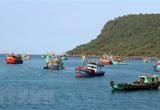 Hải sản rớt giá, ngư dân Quảng Ngãi vẫn kiên cường bám biển