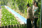 Làm chuồng nuôi lươn không bùn nhung nhúc, người các tỉnh tấp nập tới mua