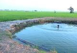 An Giang: Ly kỳ giếng nước cổ to như cái ao hơn trăm năm nay chưa từng cạn