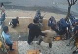 Cho thôi việc đối với võ sư đánh người chê khu du lịch Quỷ Núi trên Facebook