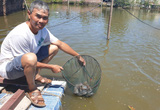 Thái Bình: Độc đáo mô hình con thỏ nuôi con giun, con giun nuôi 1 tấn cá trê đồng