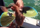 """15 con vật kỳ dị nhưng có thật: Cá có cánh, sâu bướm đầu rồng, loài cá trông như """"quái vật"""""""