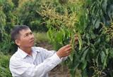 Anh nông dân tỉnh Bến Tre cứ hễ có tiền là mua thêm đất trồng thứ cây đặc sản này