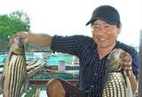 Vĩnh Long: Cá trà sóc đặc sản nuôi trên sông Cổ Chiên vừa bắt lên đã nhảy tưng tưng trên mạng xã hội