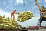 Hơn 200 thương nhân đủ điều kiện kinh doanh xuất khẩu gạo