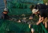 Một ông nông dân tỉnh Thừa Thiên Huế 20 năm ròng rã nuôi con gì mà được Thủ tướng Chính phủ tặng Bằng khen?