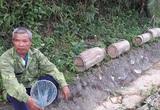 Hà Tĩnh: Loài côn trùng khá hung dữ này tới mùa bay vèo vèo, dân ra bìa rừng bắt về để làm gì?