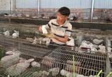 Lão nông chân đất mày mò nuôi giống thỏ Úc, thu nửa tỷ đồng/năm