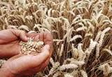 EU và Mỹ thống nhất hạn ngạch nông nghiệp điều chỉnh hậu Brexit