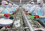 Loạt nhà máy chế biến tôm hàng trăm tỷ được khánh thành