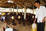 Quảng Nam: Những địa phương nào bị nghiêm cấm chăn nuôi trong nội thành?