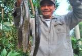 Đem loại cá vừa trơn vừa nhớt đi nấu canh chua với lá giang, ăn đến đâu thấy tỉnh cả người đến đấy