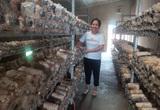 Quảng Nam: Nhờ vốn ưu đãi tiếp sức, nhiều nông dân đã mạnh dạn làm giàu
