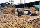 Một mặt hàng xuất khẩu chủ lực của Việt Nam sang Trung Quốc còn tồn kho rất ít