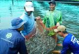 Mỹ, Trung Quốc, Nhật Bản cùng tăng mua loài thủy sản này của Việt Nam, đắt như tôm tươi là có thật
