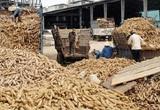 Nông sản Thực phẩm Quảng Ngãi chia cổ tức năm 2020 bằng tiền với tỷ lệ 35%