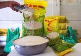 Xuất khẩu gạo ST24 tăng phi mã hơn 500%