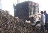 Đang nhập cả triệu tấn trộn vào thức ăn chăn nuôi, tại sao Trung Quốc đột ngột giảm mua nông sản này của Việt Nam?
