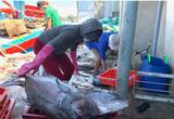 """Quảng Ngãi: Nhiều tàu về cảng bị kẹt """"lệnh cấm"""" đã được phép bán hải sản"""