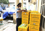 Gần 1,7 tấn nho xanh Trung Quốc nhập lậu bị thu giữ tại Lạng Sơn