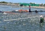 Nhà máy thủy sản ở miền Tây gấp rút hoạt động trở lại