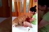 Có chú chó như thế này làm bạn là niềm mơ ước của tất cả chúng ta