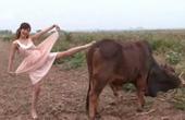Truyện cười: Tại sao nhiều bệnh bò điên