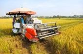 Nông dân Hà Nội đội nắng đón vụ mùa bội thu