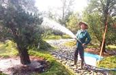 """Một ông nông dân sở hữu vườn tùng kiểng 3.000 cây, có cây như """"báu vật"""" miền Tây"""
