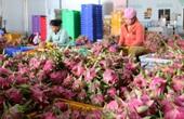 Trung Quốc đặt mua nhiều, giá loại quả nhiều tai, chi chít hạt bất ngờ tăng giá mạnh