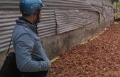 Thương lái Trung Quốc săn mua cây huyết đằng