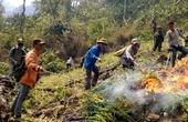 Mường Tè (Lai Châu): Tổ chức triệt phá cây thuốc phiện