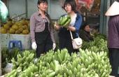 Phú Yên: Giá chuối giảm 5.000 đồng/kg