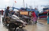 Ngư dân câu cá ngừ chuyển hướng làm ăn
